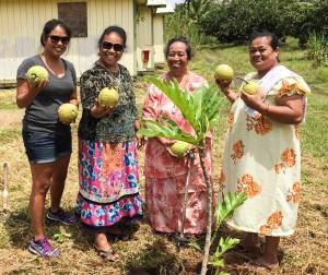Pahoa plants group small
